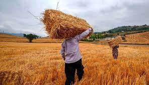 احتمال تخصیص یارانه به گندم کاران وجود دارد